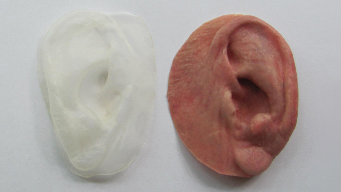 Left and Right Ear